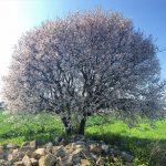 alacati_gallery_16